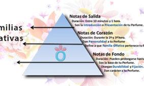 Familias de los perfumes, notas olfativas