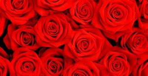 Perfumes con olor a Rosas