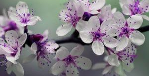Perfumes Primavera verano