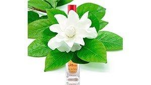 Perfumes con gardenias